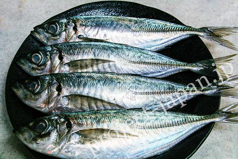 Japanese horse mackerel
